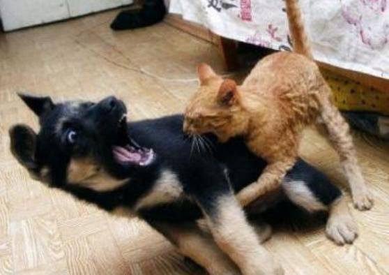 Gatti Cattivi Ecco I Felini Più Terribili Del Web Video