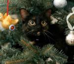 gatti-alberi10