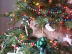gatti-alberi14