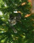 gatti-alberi17