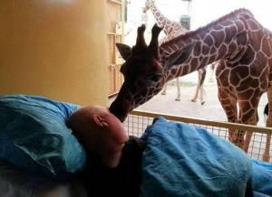20140321_65451_giraffa