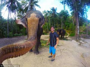elefante-669158