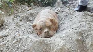 cane-sepolto-francia