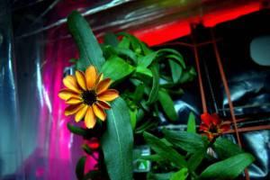 fiore3