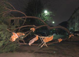 Allerta Meteo alberi spezzati Napoli