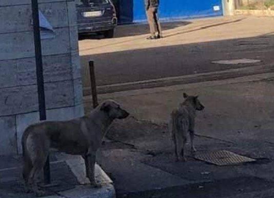 Cani aspettano padrona ricoverata