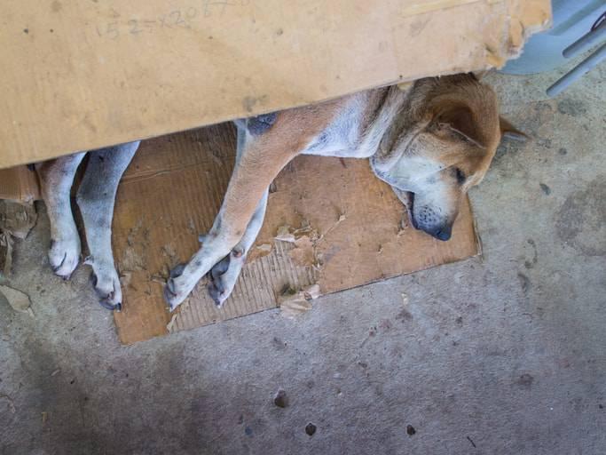 Cane ucciso a calci