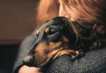 Perchè i cani tremano