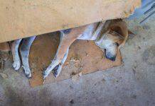Terrore in strada: trova un cane e lo impicca con un filo ad un albero