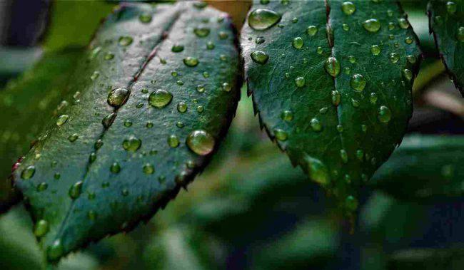 rimedi-umidita-casa-come-fare (1)