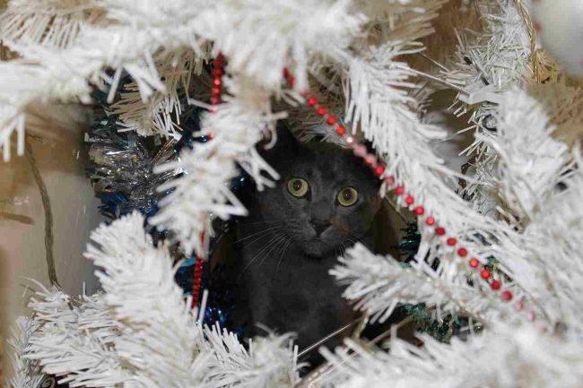 come-fare-albero-natale-gatto (2)