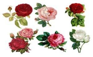 Oroscopo fiori