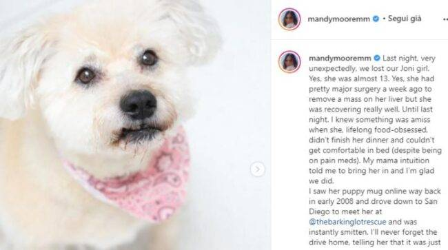 """Terribile perdita per l'amata attrice e cantautrice Mandy Moore: """"Il mio cuore è spezzato"""", post da brividi"""