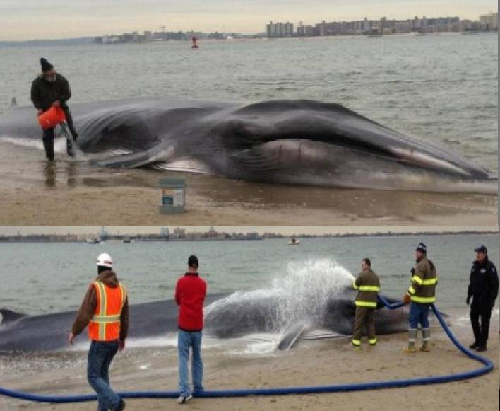 balena incontri ragazze milano