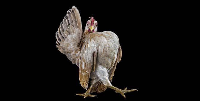 concorso bellezza galli