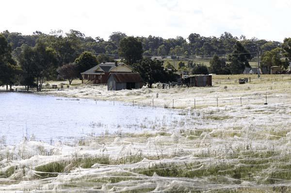 fattoria ricoperta da ragni