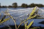 fattoria australia12