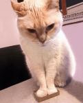 gatti11